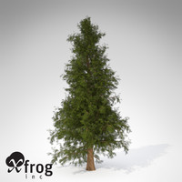 3d model of xfrogplants western red cedar