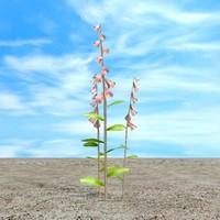 foxglove plant 3d 3ds