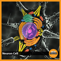3d model neuron cell