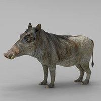 pig hylochoerus max