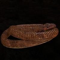 3d model snake