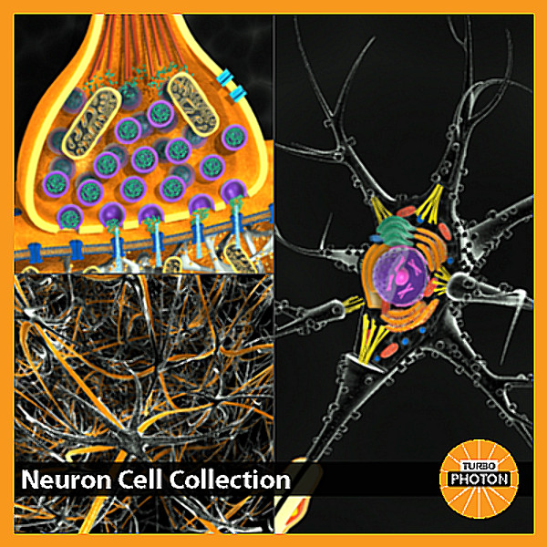 Neuron_Cell_Collection.bmp