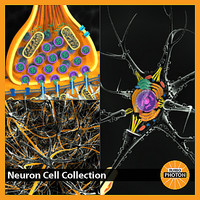 Neuron Cell Collection
