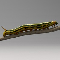 caterpillar insect 3d model