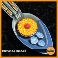 spermatozoon cell 3d model