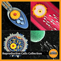 Reproductive Cells Collection