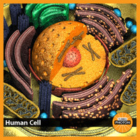 human cell 3d model