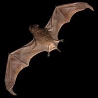 bat.3ds