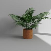 3d model palms plant