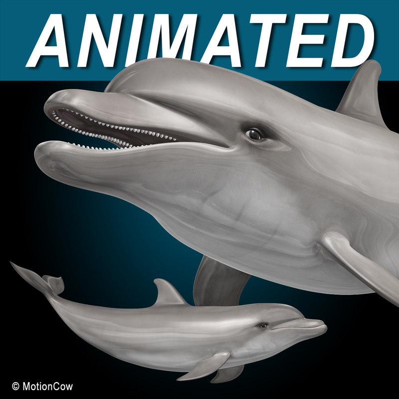 Dolphin_A.jpg