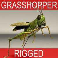 grasshopper rigged 3d model