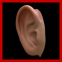 Ear (High and Low Poly)