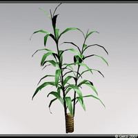 yucca plant x