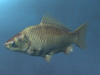 lightwave goldfish fish