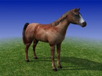 Brown Horse Low Poly 3D Model
