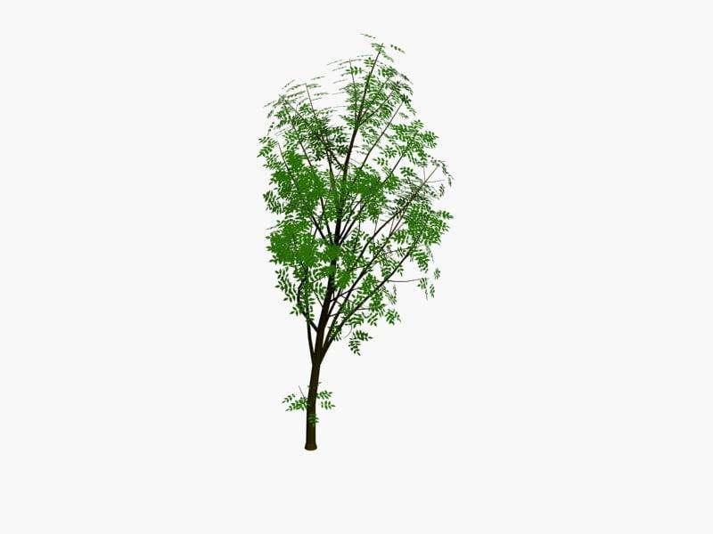 tree1pack4.jpg