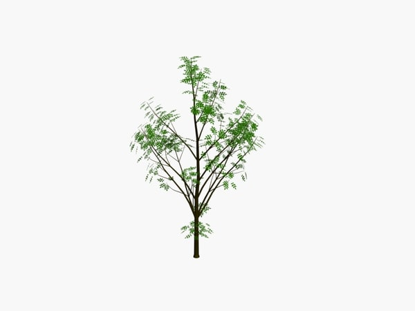 tree 3d model - tree pack 4.zip... by 3dreams