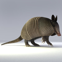 nine-banded armadillo 3d model
