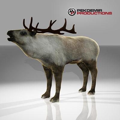 reindeer-c4d-01.jpg
