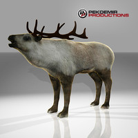 reindeer deer 3d model