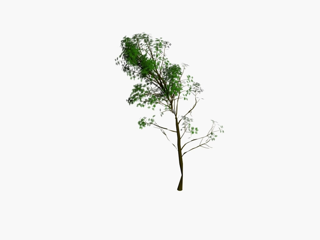 tree1pack2.jpg