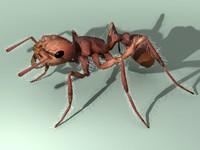 maya rigged ant
