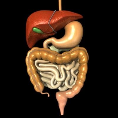 digestiveb.jpg