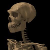 3d model homo erectus