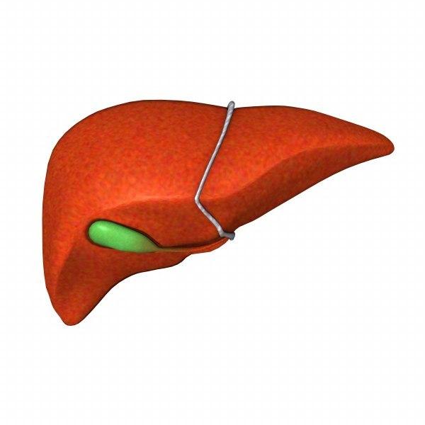 liver_render.jpg