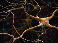 neurons cells max