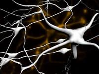 3ds neurons cells