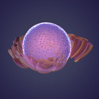 nucleus rough reticulum 3d ma