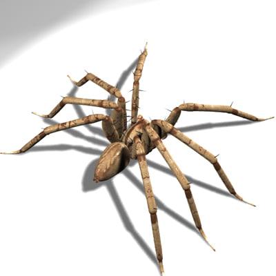 Spider_01_Back.jpg