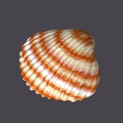 shell01.jpg
