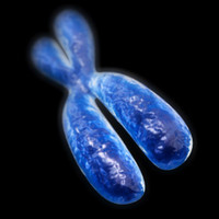 chromosome 3d model