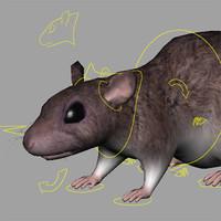ma rat rig hires