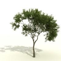tree 3d max