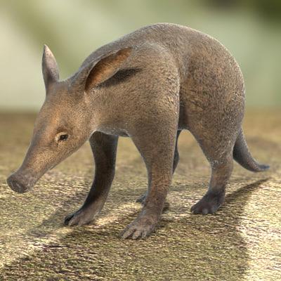 aardvark-05.jpg