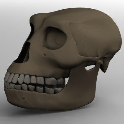 australopithecusscull.jpg