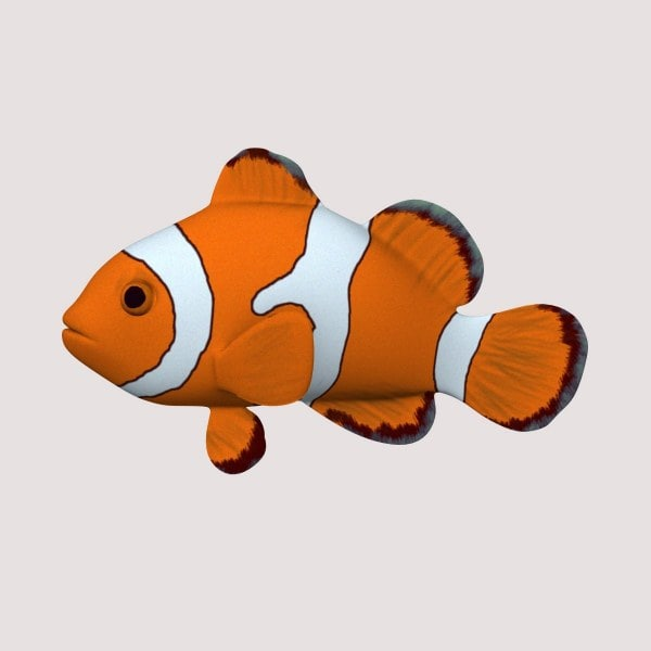anemonefish_render.jpg