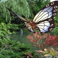 butterfly wings lwo