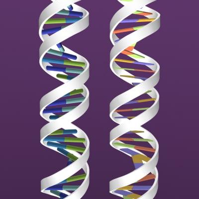 DNA.zip_thumbnail1.jpg