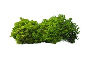 leafy bush 3d 3ds