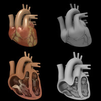 heart+heart section