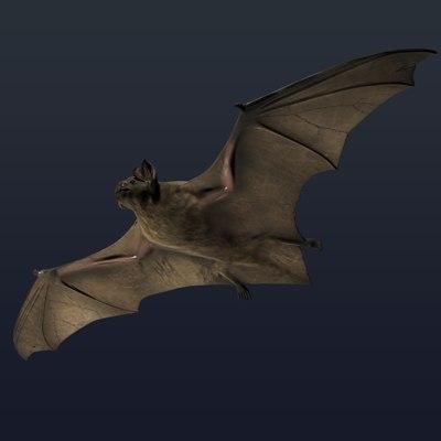 bat-02.jpg