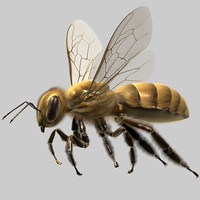 3ds max honey bee