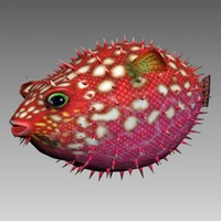 3d hedgehog fish model