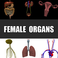 female organs 3ds