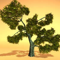 Nort trees