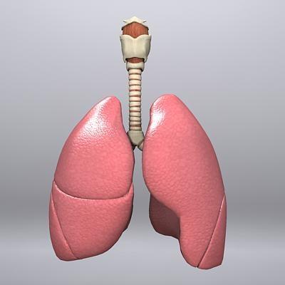 pulmonary_1.jpg